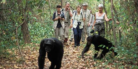 3-Day Mahale Mountains Budget Chimpanzee Trekking Safari