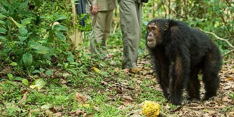 14-Day Mahale Mountains Chimps Trek & Zanzibar Holiday