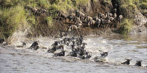 3-Day Masai Mara Budget Group Tour