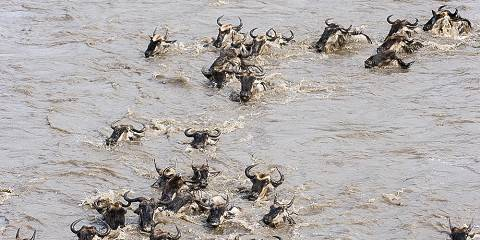 5-Day Serengeti Mara River Crossing Migration