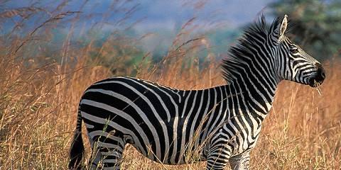 3-Day Mkomazi National Park Adventure