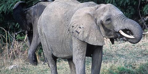 9-Day Affordable Wildlife Safari and Zanzibar Vacation