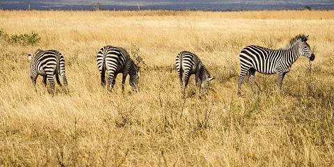 7-Day Northern Circuit Safari & Cultural Experience