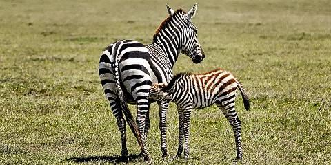 7-Day Lake Manyara Safari and Zanzibar Beach Holiday