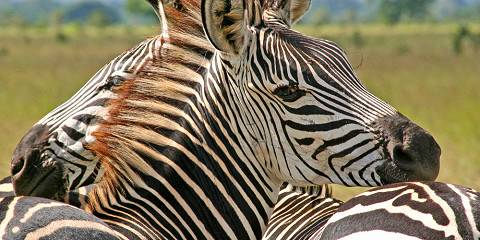 9-Day Tour of Tarangire, Manyara, Ngorongoro & Serengeti