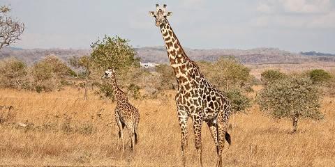 7-Day Tanzania Wildlife Wonders