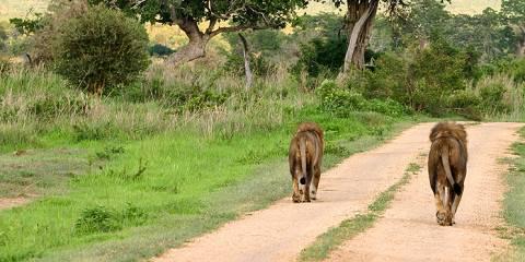 5-Day Serengeti Wildebeest Migration Safari