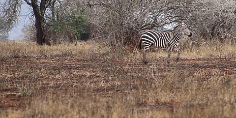 6-Day Tazama Cheetah Kenya Safari