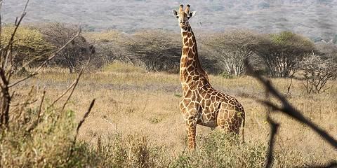 5-Day Night Game Drive L Manyara and Trekking Ngorongoro