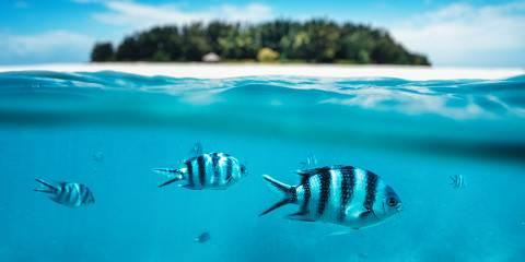 12-Day Luxury Tanzania Family Safari & Beach