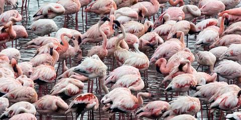 4-Day Manyara National Park, Serengeti & Ngorongoro