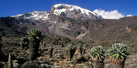 Machame Kilimanjaro Summit