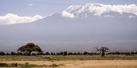 1-Day Experience the Thrill of Mt Kilimanjaro Trekking