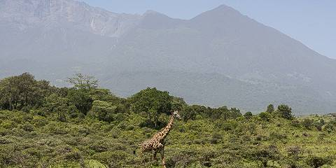 1-Day What Amazing Trip to Arusha National Park