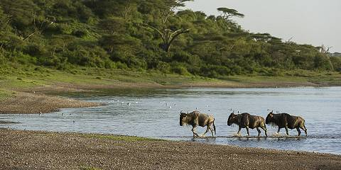 7-Day Tanzania Serengeti Migration Safari