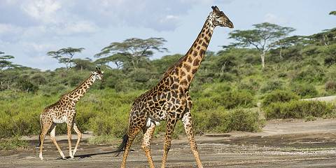 6-Day Tarangire, Lake Manyara, Ngorongoro and Serengeti