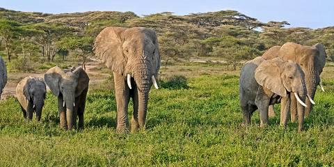 6-Day Tanzania Wildlife Expedition