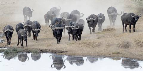 8-Day Elewana Luxury Simba Safari