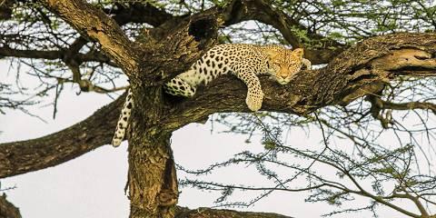 8-Day Luxury Lodge Migration Safari to Northern Tanzania