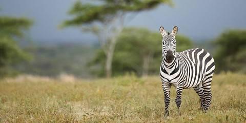 8-Day Tanzania Safari and Zanzibar Getaway