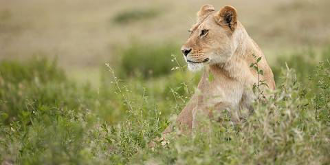 5-Day Tarangire, Manyara, Serengeti, Crater - Luxury