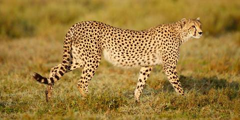 5-Day Budget Camping to Serengeti & Ngorongoro Crater