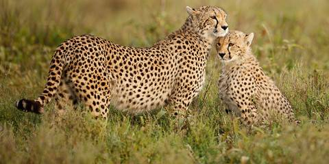 4-Day Touch of Wilderness Safari - Group Tour