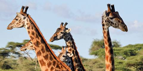 3-Day Mikumi National Park Including Maasai Culture