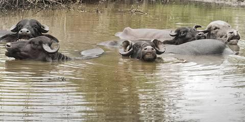 3-Day Masai Mara Budget Group Safari
