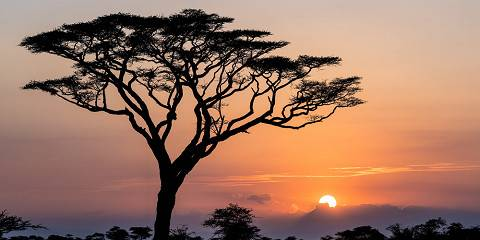 7-Day The Ultimate Rongai Route - Mt Kilimanjaro