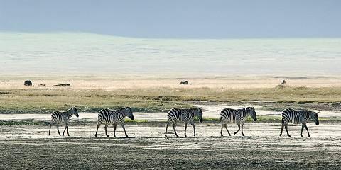 4-Day Tarangire, Serengeti and Ngorongoro - Comfort