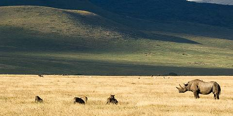 1-Day Ngorongoro Crater Wildlife Tour
