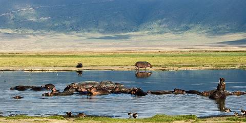 4-Day Tarangire-Serengeti-and-Ngorongoro