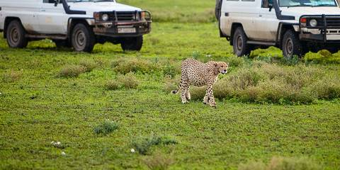 3-Day / 2 Nights Join Group Serengeti & Ngorongoro