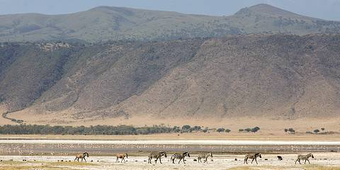 4-Day Luxury North Highlight Safari and Cultural Tour