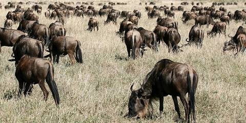 3-Day Last Minutes - Dar - Great Migration Serengeti NP