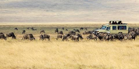 5-Day Tarangire Serengeti Ngorongoro & Manyara Safari