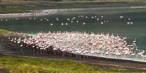 9-Day The Best of Tanzania & Lake Natron