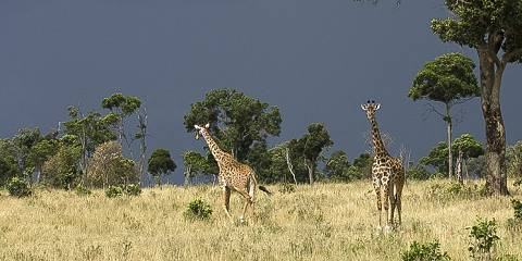 4-Day Tanzania Budget Group Joining Magical Safari