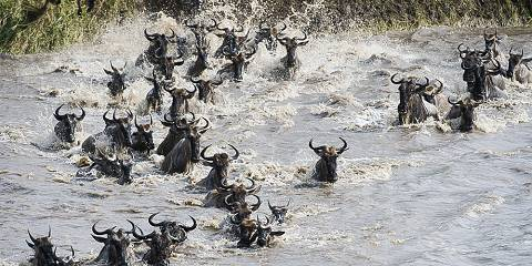 4-Day Mara River Crossing - Great Migrations