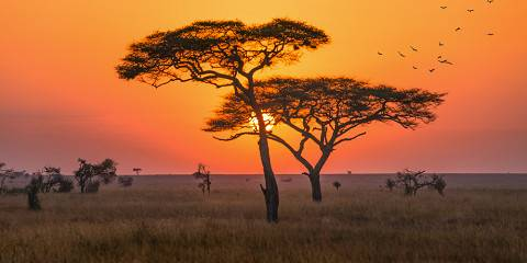 6-Day Selous and Mikumi Adventure