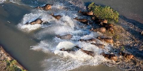 6-Day River Crossing Migration July to September