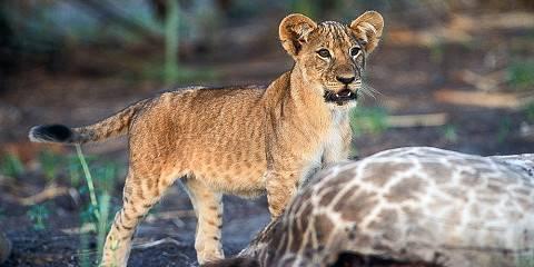 5-Day Serengeti and Ngorongoro Great Safari