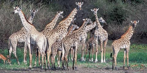 4-Day Tarangire, Serengeti and Ngorongoro - Luxury