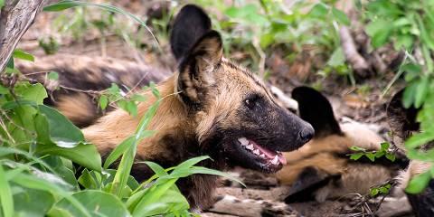 3-Day Private Safari to Selous Game Reserve