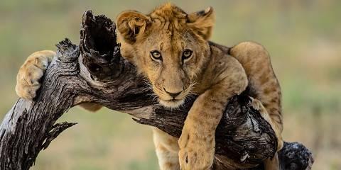 10-Day Untamed Safari and Zanzibar Holiday Tour