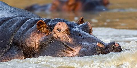 1-Day Ngorongoro Conservation Tour