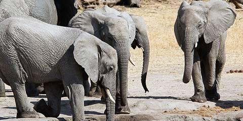 4-Day Tour to Ngorongoro, Serengeti and Manyara Park