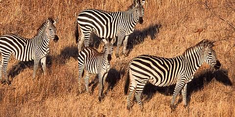 4-Day Safari in Tarangire, Serengeti and Ngorongoro