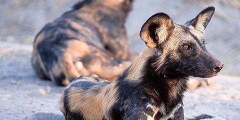 5-Day Ruaha Wildlife Safari